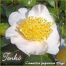 https://www.kamelienshop24.de/media/images/kamelienfotos-preview/tenko1.jpg