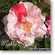 Camellia japonica Mable Bryan